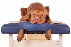 Ilustración de Masaje Terapéutico para Perros