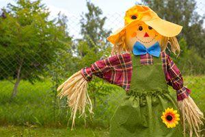 Problemas comunes en el jardín. Como solucionar problemas comunes en el jardín. 8 problemas comunes en la jardinería