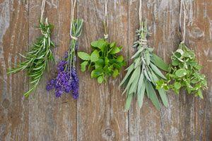 Ilustración de Plantas para Tratamientos de Belleza