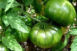 Cómo hacer una huerta en macetas y ahorrar en la compra de verduras