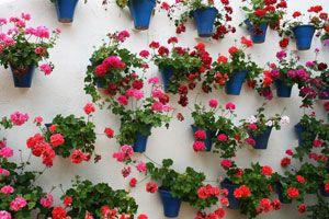 Jardines económicos en espacios reducidos