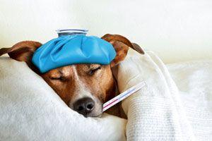 Ilustración de Cómo Medicar a un Perro