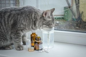 Cómo Darle una Pastilla a un Gato
