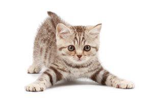 Ilustración de Remedios Caseros para Ahuyentar Gatos