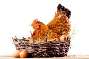 Ilustración de ¿Qué son los Huevos Astrológicos?