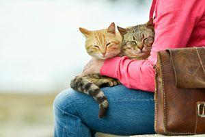 Ilustración de ¿Por Qué los Gatos se Suben a las Piernas?