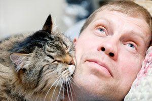 Conductas en las que los gatos demuestran cariño. Cómo demuestran su amor los gatos? Formas en las que el gato demuestra afecto