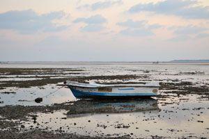 Qué es la marea roja? Cómo evitar las toxinas de la marea roja. Consejos para evitar la marea roja.
