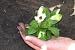 Cómo trasplantar una planta o arbusto