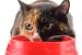 Cómo alimentar a un gato