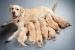 Cómo ayudar a la Perra en el cuidado de los Cachorros