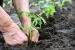 Cómo Elegir los Esquejes o Brotes para Plantar