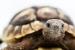 Cómo cuidar una Tortuga Terrestre