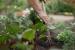 Como prevenir las plagas en las huertas