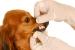 Cómo cuidar los dientes de los perros