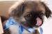 Cómo dar un medicamento o remedio a una mascota