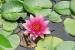 Cómo decorar estanques con plantas