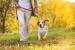 Cómo Entrenar a un Perro. Entrenamiento básico