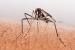 Cómo Evitar las Picadas de los Mosquitos