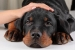 Cómo prevenir la ansiedad por separación en una mascota