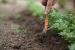 Como acabar con las malas hierbas