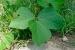 Como eliminar hierbas anuales o perennes