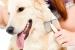 Como cuidar el pelaje de nuestro perro