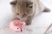 Cómo Elegir Juguetes Seguros para Gatos