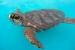 Cómo Cuidar a una Tortuga Acuática