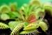 Cómo Cuidar a las Plantas Carnívoras