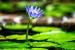 Cómo Cuidar las Plantas Acuáticas