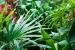 Cómo elegir Plantas para un Jardín de Estilo Tropical