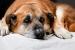 Cómo cuidar a un perro o gato en su vejez