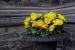 Cómo utilizar flores para ahuyentar insectos