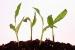 Cómo cultivar vegetales comunes en un huerto hogareño