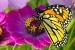 Cómo crear un Jardín de Mariposas