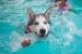 Cómo evitar que el perro entre a la piscina