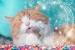 Cómo hacer Golosinas para Gatos