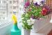 5 Plantas Ideales para el Verano