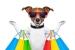 Las Mascotas más Populares de Instagram
