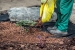 Crea Mantillos para Cuidar las Plantas en Invierno