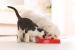 Cómo hacer Bocadillos para Perros y Gatos