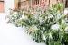 Las Mejores Plantas para el Invierno