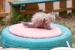 Cómo Quitar las Pulgas a un Gato